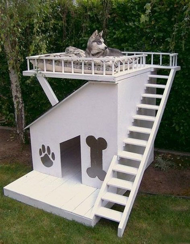 Home Design Ideas For Dogs: Doghouse Shed Design Ideas
